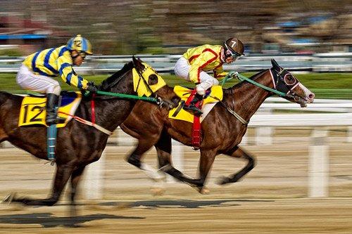cá cược đua ngựa