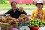 Độn đá vào nho Ninh Thuận, người bán rong kiếm chục triệu/tháng