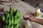 Hoa quả nhiễm hóa chất tràn lan, Cục An toàn thực phẩm nói gì?