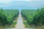 Việt Nam đầu tư 155,4 triệu USD ra nước ngoài