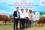 FrieslandCampina Việt Nam tặng bò cho các hộ nông dân tại tỉnh Long An