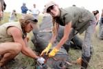 Chiến dịch bảo tồn Tê giác của Ogilvy VN xuất sắc giành giải đồng Cannes Lions