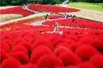 """Khám phá """"Cung đường kim cương"""" mùa lá đỏ tuyệt đẹp ở Nhật Bản"""