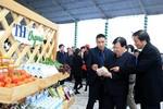 Đầu tư làm sữa Organic, TH nâng tầm thương hiệu nông nghiệp Việt