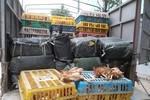 Hà Nội: Phát hiện gần 4 tấn nầm lợn và gà thải Trung Quốc