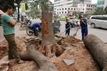 Chủ tịch Hà Nội lệnh dừng chặt cây xanh