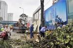 """Có nên coi việc chặt cây xanh ở Hà Nội là """"phá hoại có tổ chức"""" hay không?"""
