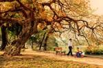 Mùa thu - mùa thay lá