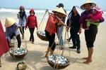Ảnh: Ngư dân Quảng Bình trúng cá trích