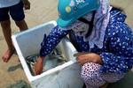 Gần 1 tấn cá biển chết đang được thu mua đưa đi tiêu thụ