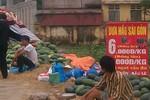 Hà Nội: Giật mình vì giá hoa quả rẻ bất ngờ