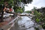 Hà Nội: Mưa to, gió lớn khiến cây xanh đổ chắn ngang đường