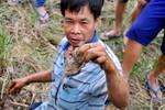 """Cảnh """"săn chuột"""" mùa đồng khô của người dân Hà Nội"""