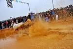 Kịch tính trường đua bò Bảy Núi của đồng bào Khmer Nam Bộ