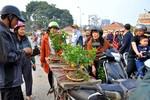Cây quất mini chơi tết hút khách tại chợ hoa Hà Nội