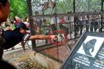 Du khách cho khỉ hút thuốc ở Vườn thú Hà Nội
