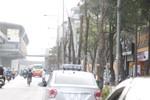 Xem cây mới trồng trên đường Nguyễn Trãi mãi trông như cái cột điện