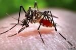 Vì sao muỗi đốt người này nhưng không đốt người khác?