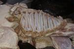 Công bố kết luận vụ việc 'bữa ăn thịt thối' cho học sinh vào tuần tới