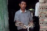 Chùm ảnh: Về nơi người dân kiếm vài tỷ nhờ nuôi rắn