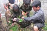 Người dân đuổi bắt lợn rừng tấn công hai người dân trọng thương