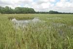 Hàng trăm ha lúa ngập úng do kênh thoát lũ bị tắc sau bão số 6