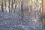Hạt phó Hạt kiểm lâm tử vong sau nỗ lực chữa cháy rừng