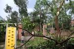 Ảnh: Mưa giông, lốc xoáy gây tốc mái hàng trăm ngôi nhà tại Nghệ An