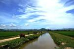 Quảng Bình yêu cầu chấm dứt việc thu phí chăn trâu