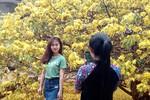 Ảnh: Cây mai cổ thụ ngàn người đến xem ở Đồng Nai