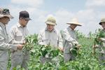 Vùng đậu nành dược liệu đầu tiên tại Việt Nam đạt tiêu chuẩn GACP-WHO