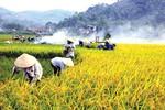Thủ tướng đồng ý chuyển mục đích sử dụng đất cho tỉnh Yên Bái