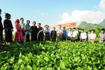 Kế hoạch hành động khuyến khích doanh nghiệp đầu tư vào nông nghiệp