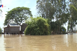 Xây dựng phương án ứng phó lũ vùng Đồng bằng sông Cửu Long