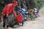 Chùm ảnh: Hoa chuối rừng đỏ rực xuống phố đón Tết