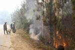 Rừng thông Đà Lạt bốc cháy ngùn ngụt