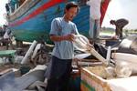 """Ngư dân Quảng Ngãi kể về nghề câu cá ngừ đại dương đang bị """"mất giá"""""""