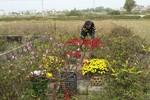 Viếng bên mộ bố