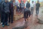 Xem cá sấu bò lổm ngổm chờ xẻ thịt trên vỉa hè ở Hà Nam