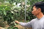 Hòa Phát nói không gây ô nhiễm, người dân nói bị khói bụi bủa vây