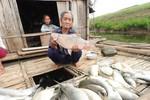 Cần khởi tố vụ án gây chết trắng cá trên sông Bưởi của Nhà máy đường Hòa Bình