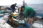 15 ngư dân được nhận Bằng khen của Chủ tịch Đà Nẵng