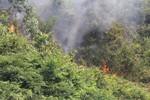 Vào tù vì đốt thực bì gây cháy rừng