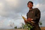 Báo Hàn Quốc: Triều Tiên mở kho quân lương cứu đói, mỗi hộ 15 cân ngô