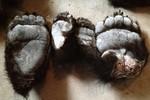 Trung Quốc bắt giữ 213 chiếc tay gấu giấu trong 5 chiếc lốp ô tô