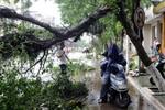 Bão Rammasun quét qua miền Nam Trung Quốc, 14 người thiệt mạng