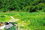 Báo Hàn: Triều Tiên trồng thuốc phiện buôn lậu sang Trung Quốc