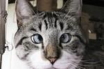 Chú mèo mắt lác trở thành ngôi sao Facebook