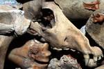 Chùm ảnh: Bức tường khổng lồ bằng xương động vật giữa thủ đô