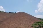 Quảng Ninh sẽ xử lý nghiêm các tập thể, cá nhân trong vụ phá rừng phòng hộ